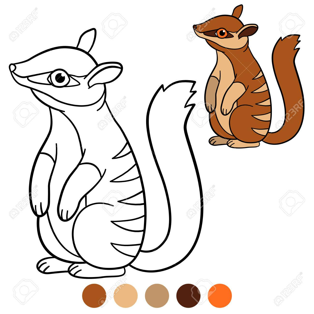 Coloring Page. Little Cute Baby Numbat Stands And Smile. Stock Vector    83316049
