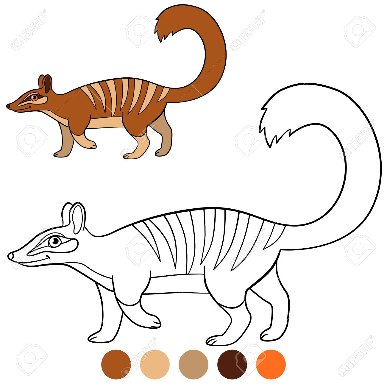 Coloring Page. Little Cute Numbat Walks And Smiles. Stock Vector   83316056