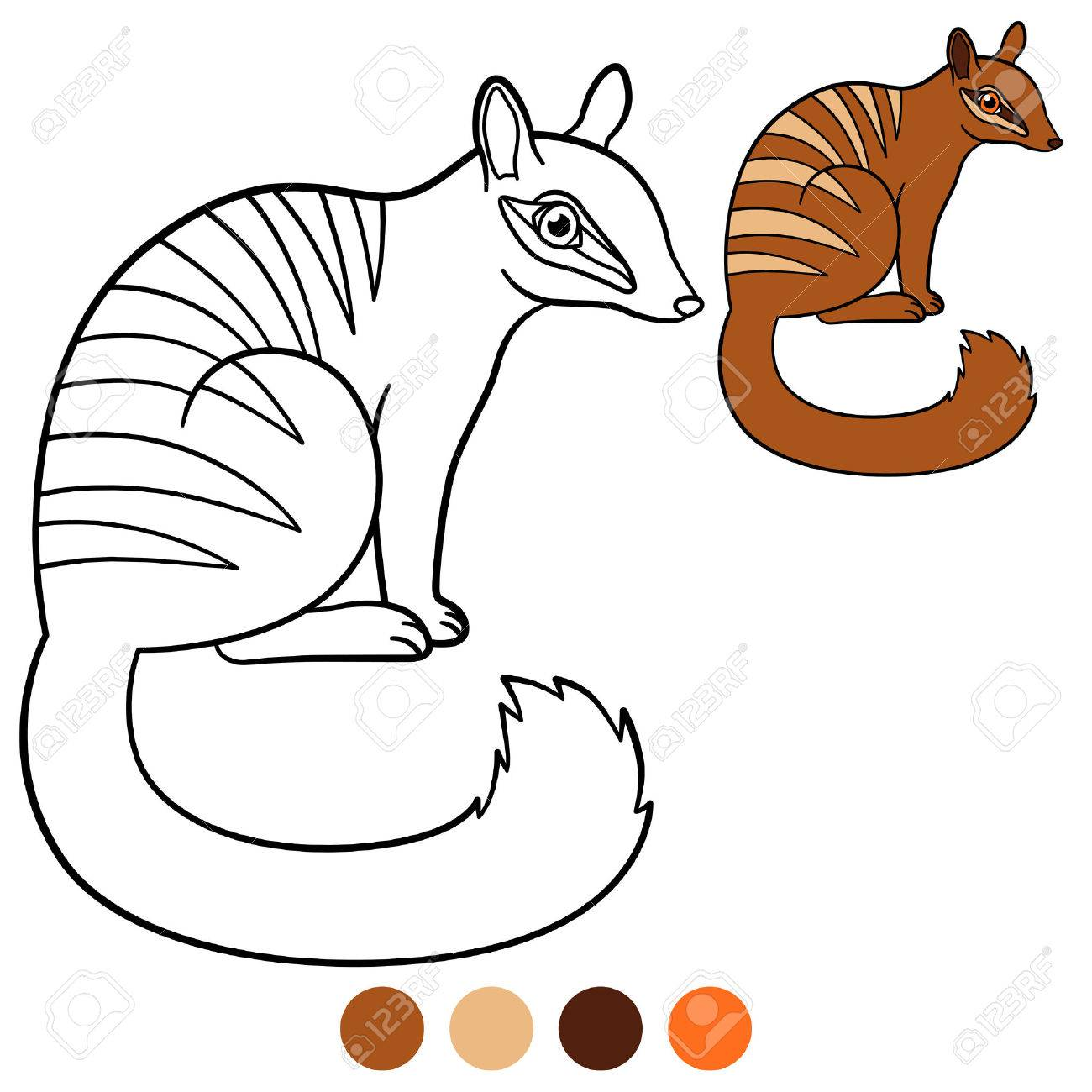 Coloring Page. Little Cute Numbat Sits And Smiles. Stock Vector   83312003