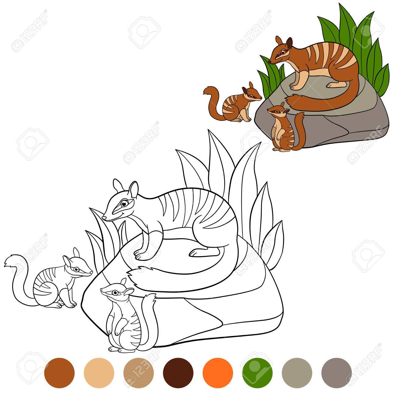 Coloring Page. Mother Numbat With Her Little Cute Babies. Stock Vector    83312049