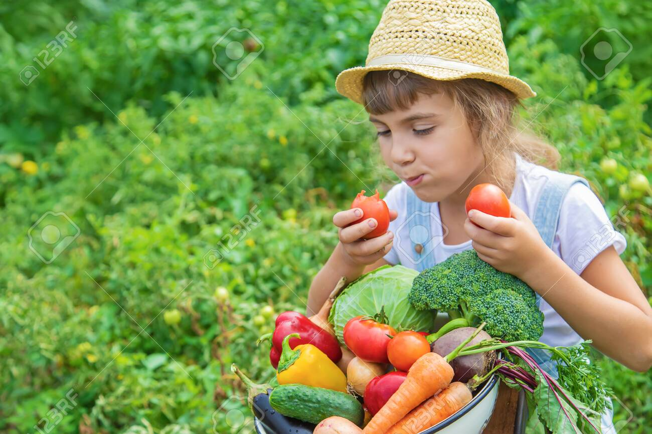 Child in the garden with vegetables in his hands. Selective focus. nature. - 143804288