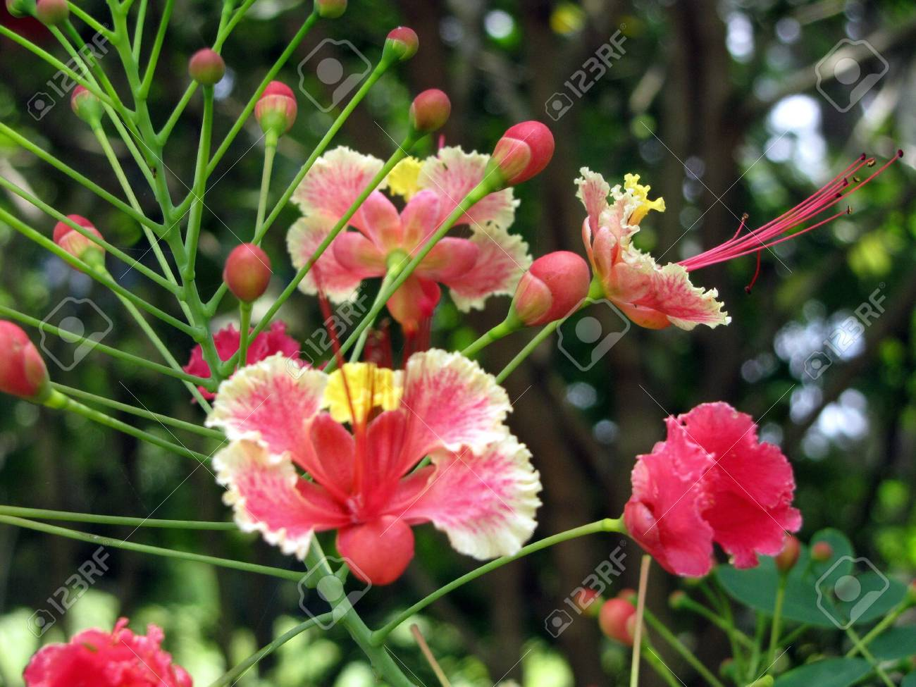 Pinky beautiful flowers blooming bright stock photo picture and pinky beautiful flowers blooming bright stock photo 4609266 izmirmasajfo Images