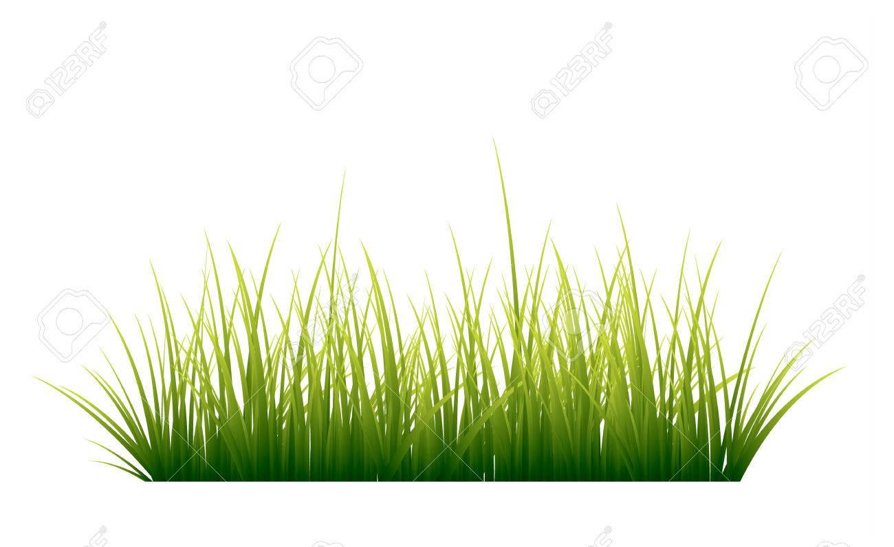 Green grass - 59134023