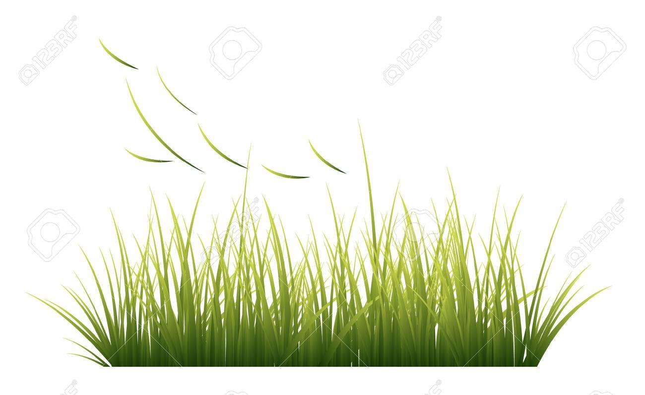 Grass, vector - 61023715