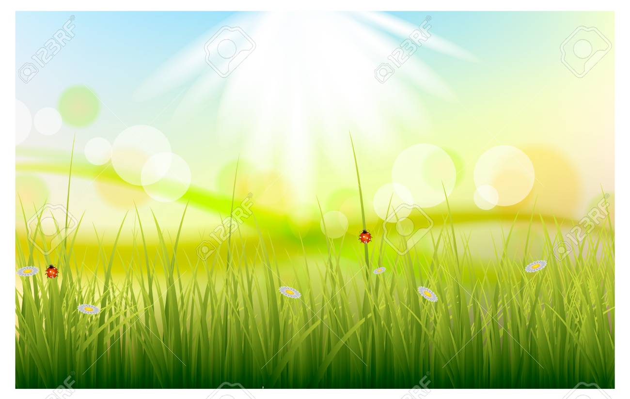Vector illustration of a beautiful summer background with green grass - 61023736