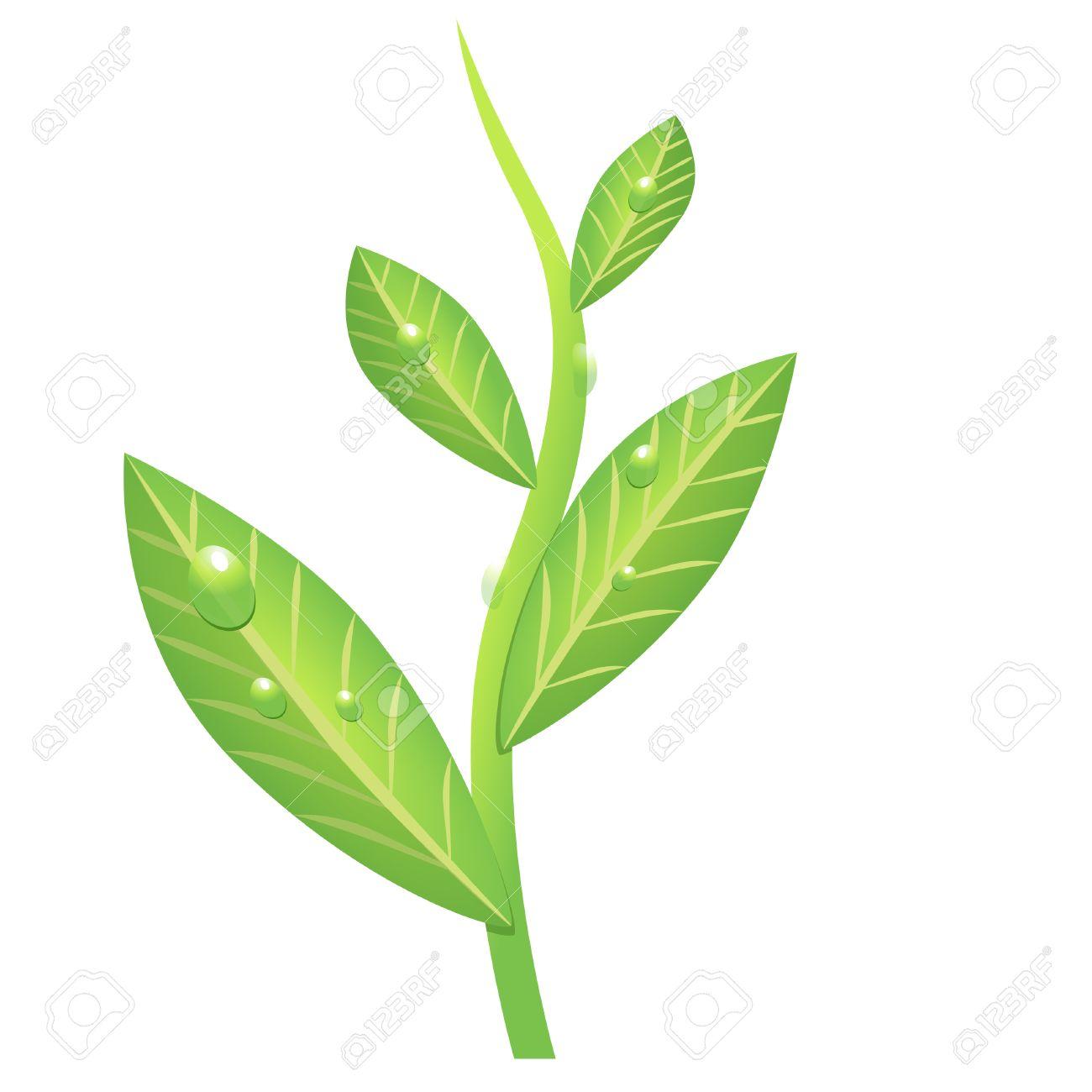 drawing green branch of tea Stock Vector - 8644205