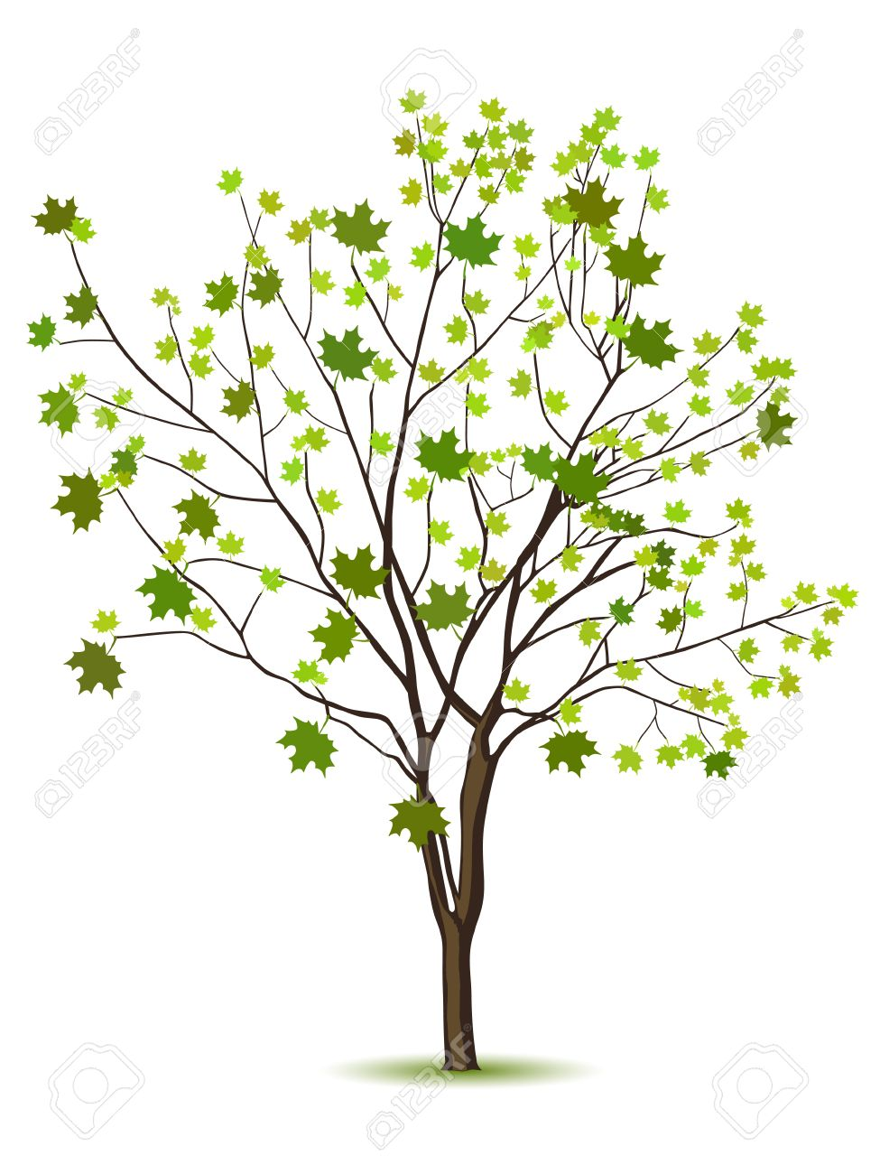 Tree with green leafage isolated on a white - 9057468