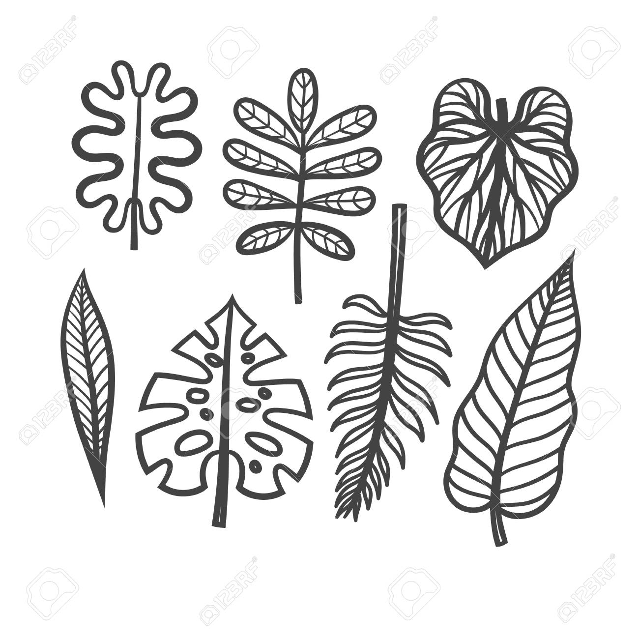 Vector Set Of Leaves Of Tropical Plants Hand Drawing Of Of Tropical Royalty Free Cliparts Vectors And Stock Illustration Image 74623832 What's included 6 large files 300dpi in the following sizes. vector set of leaves of tropical plants hand drawing of of tropical