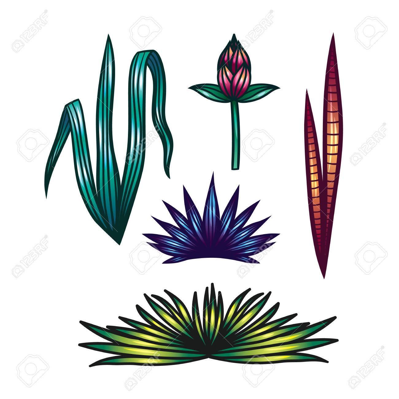 Farbvektor Satz Von Blättern Von Tropischen Pflanzen. Handzeichnung ...
