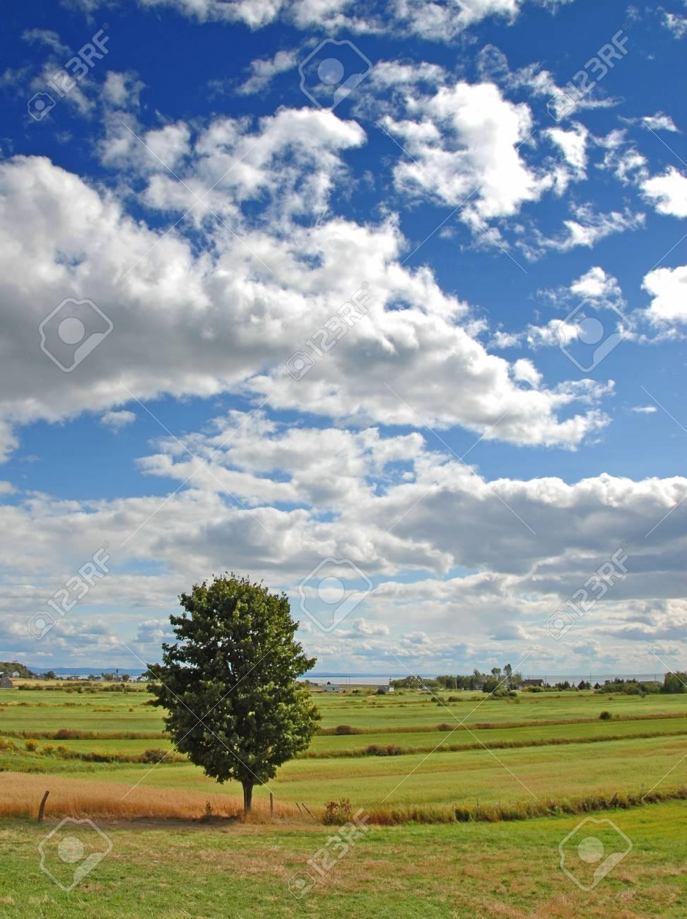 tree in field Stock Photo - 541529