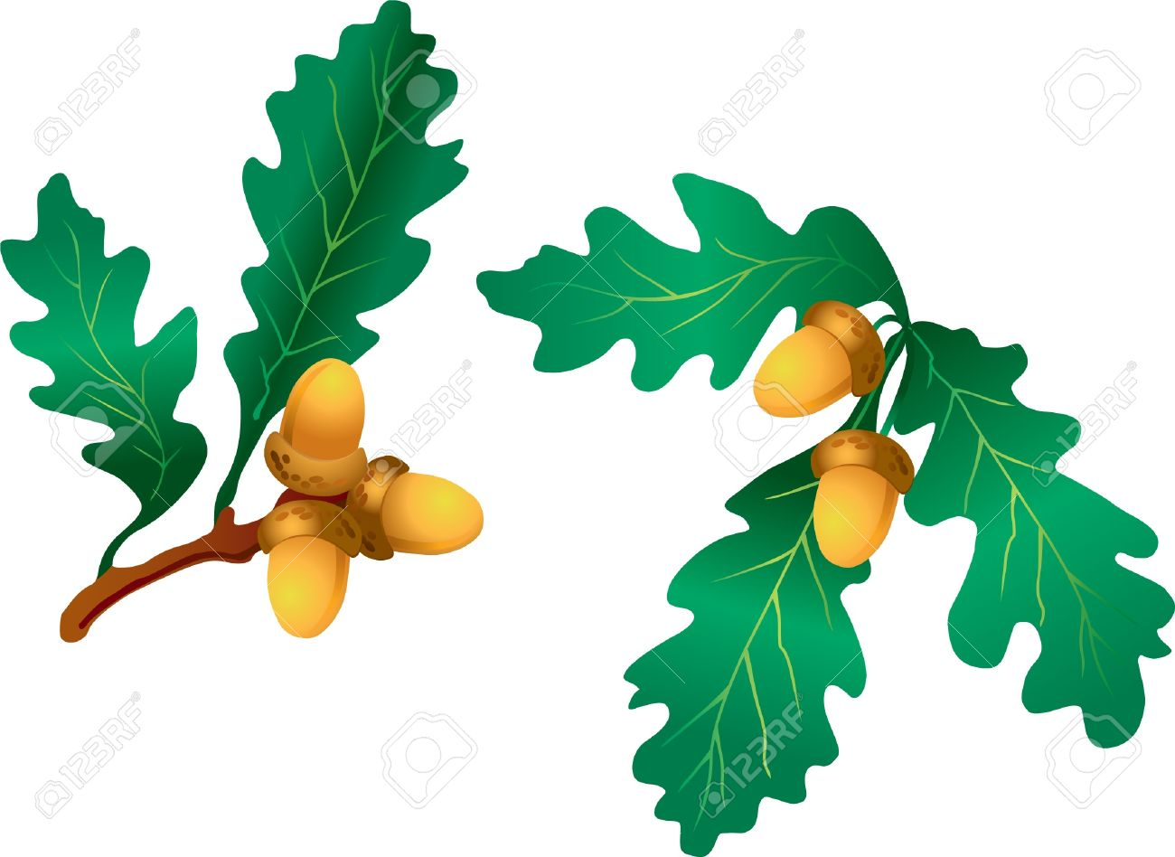 Branch with oak leaves and acorn Stock Vector - 13728377