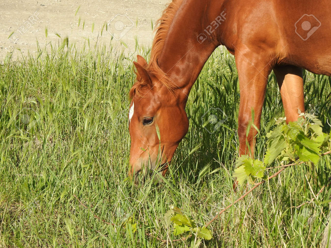 Beautiful wild horse in the pasture - 166320124