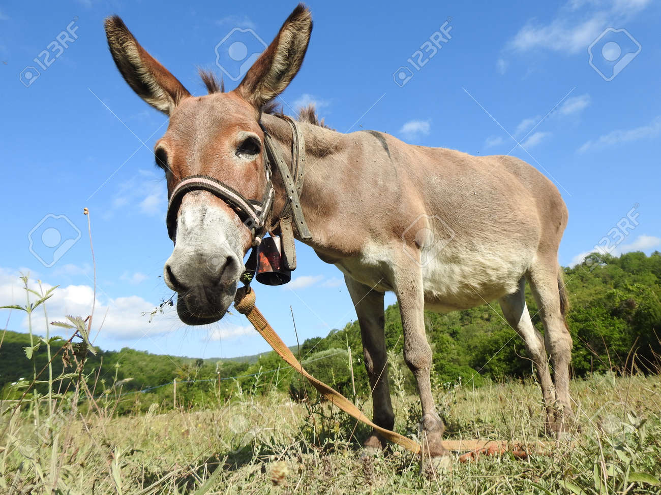 young donkey grazes in the pasture - 166319431