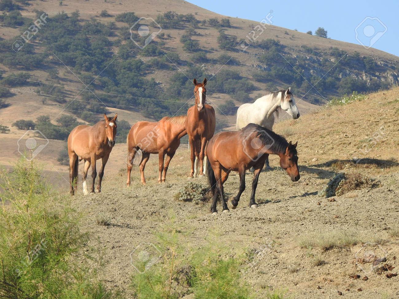 Herd of beautiful wild horses in the pasture - 166319552