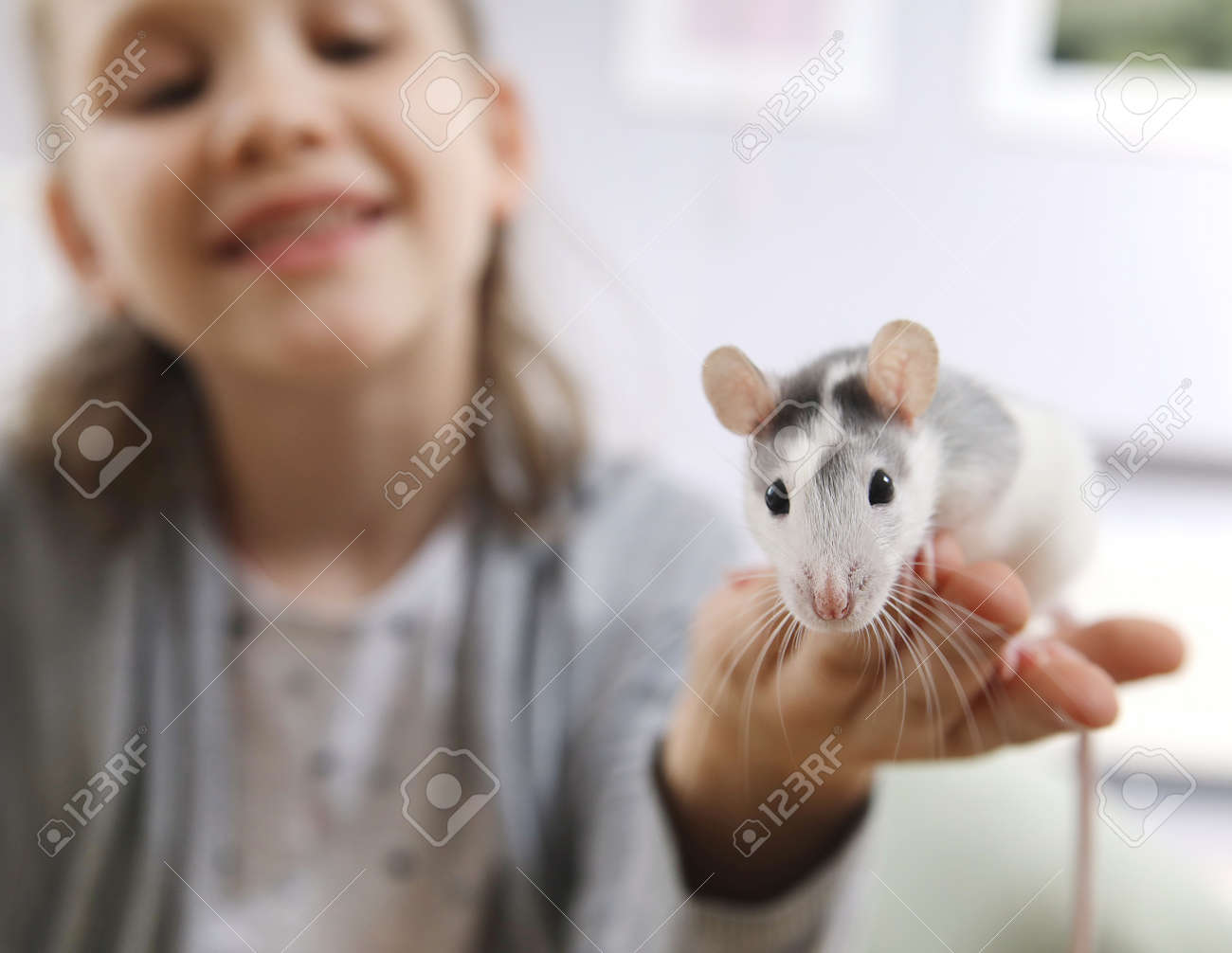 Little girl cute plays and makes friends with a white tamed mouse at home. - 167908823