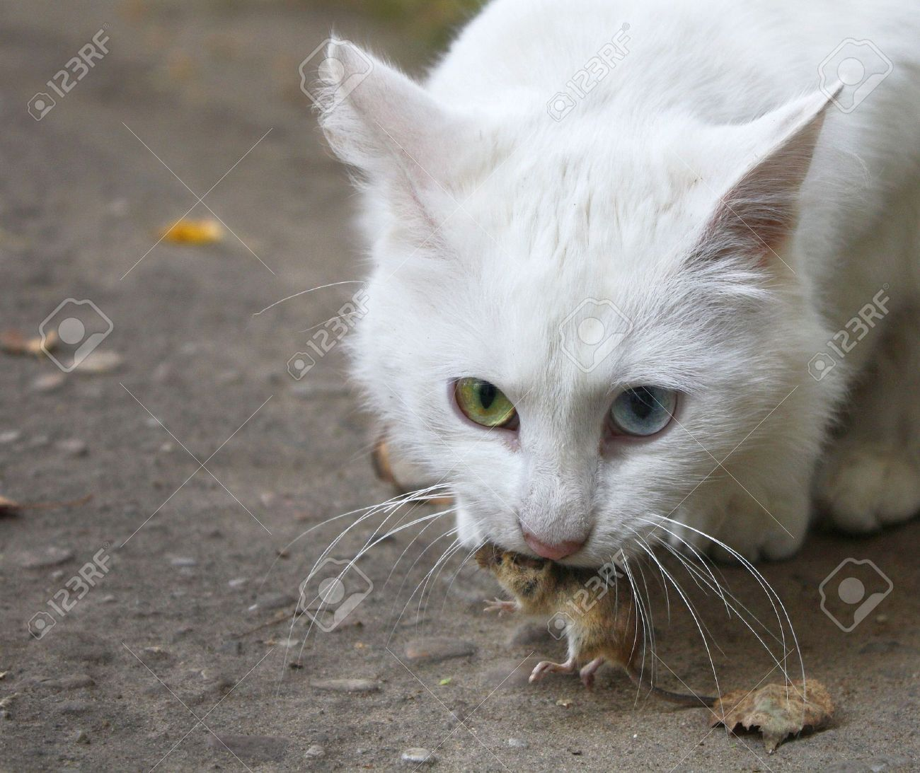 The cat has caught the mouse - 7807439