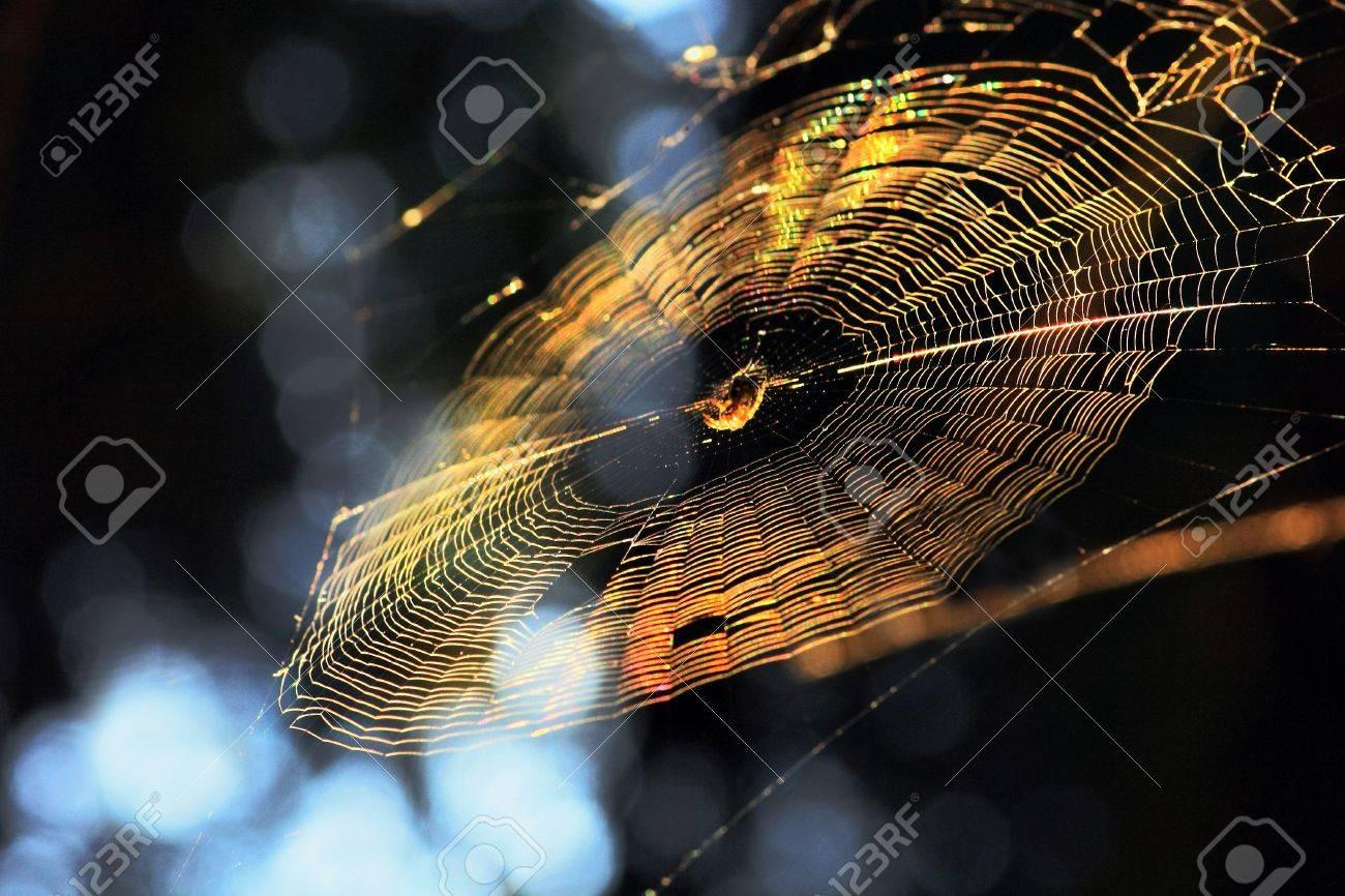 Web in sun beams - 10995093