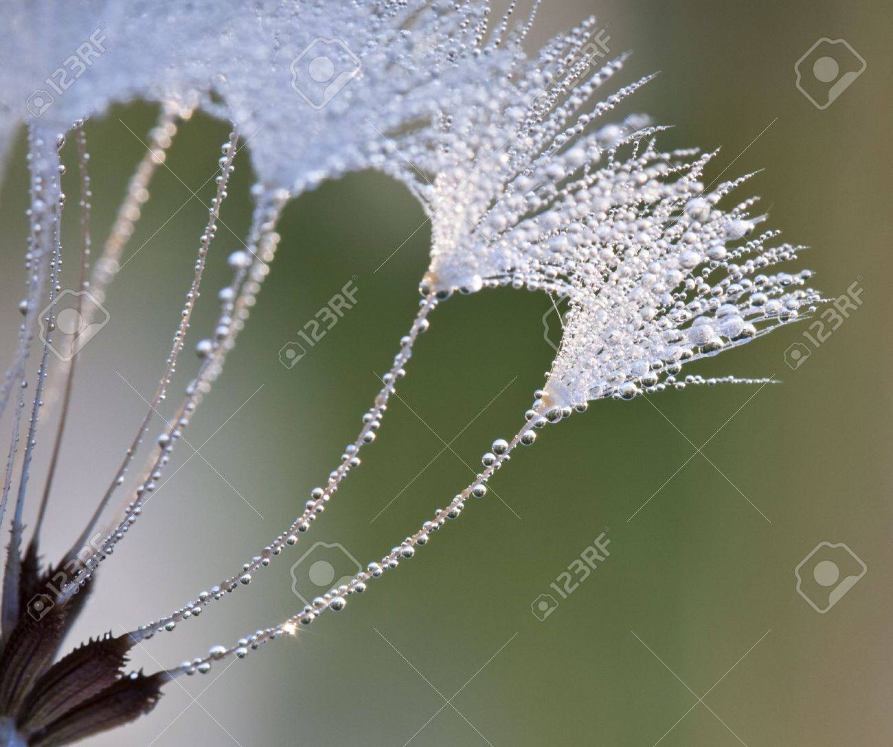 Dew drops on a grass in the morning - 10400258