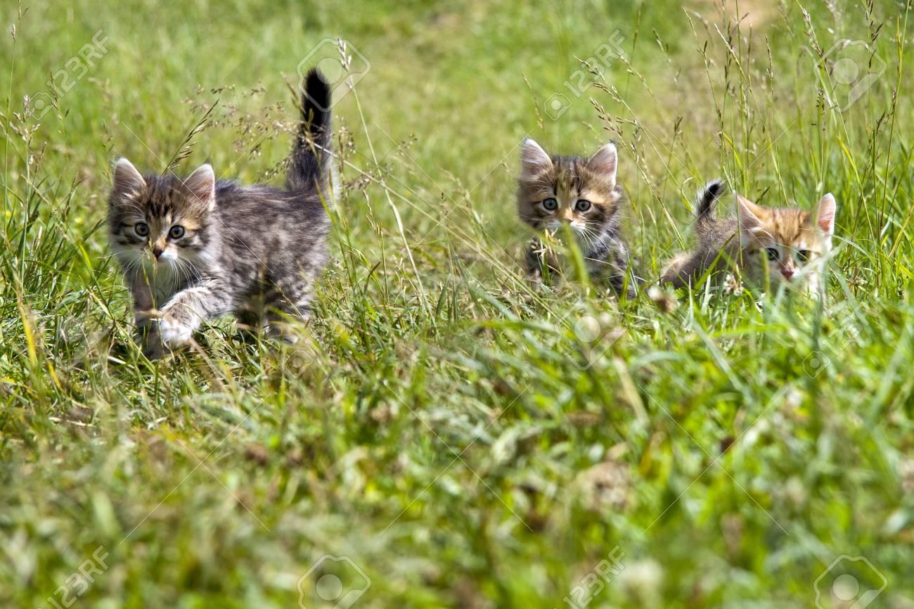 Kittens Stock Photo - 16935367
