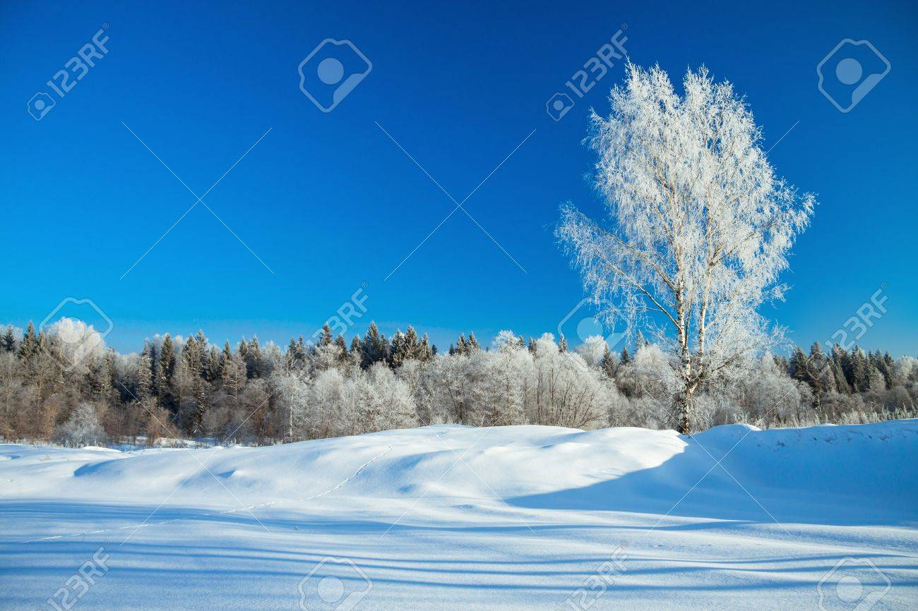 beautiful winter rural landscape with the blue sky and the wood - 21526938
