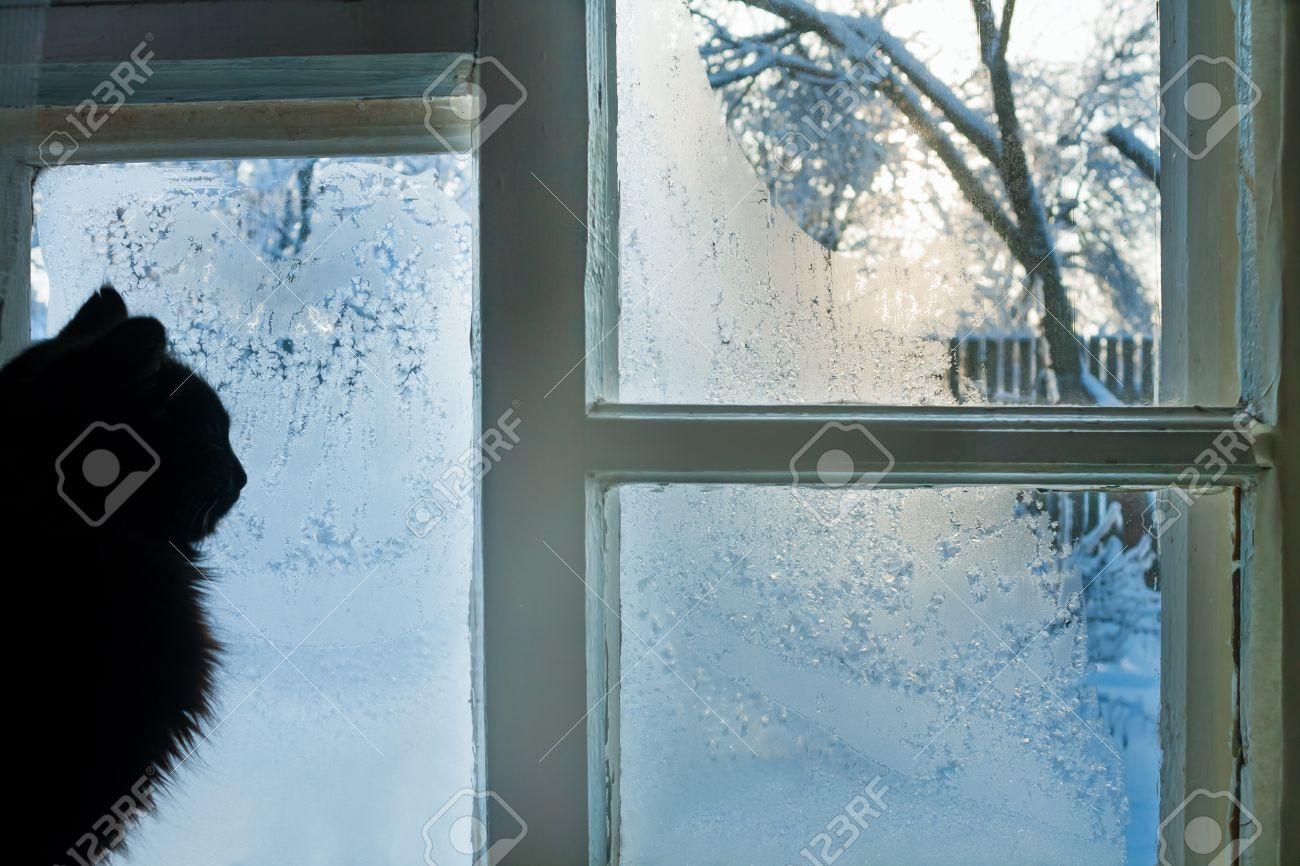 the cat looks at the street through the frozen winter window - 22507957