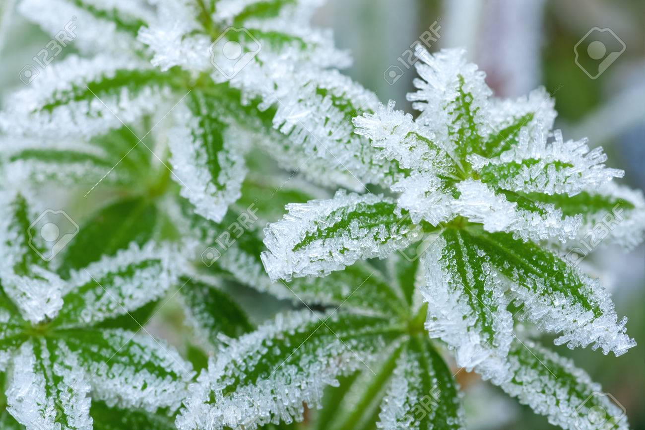 abstract background from a grass covered with hoarfrost - 22507961