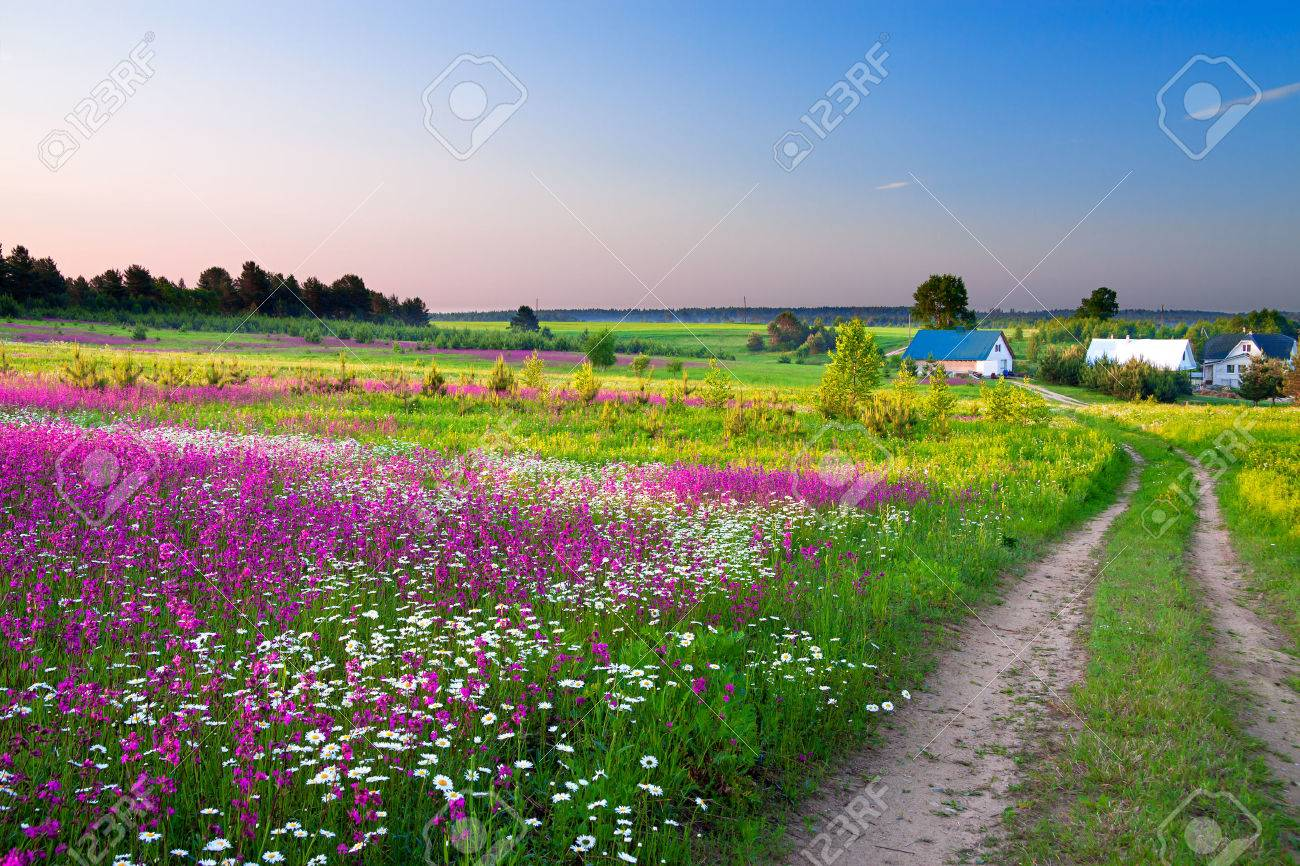 summer rural landscape with a blossoming meadow, the road and a farm - 24356716