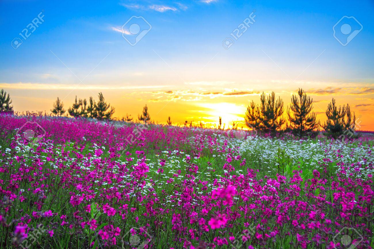 Sunrise and flowers scenery - 24362402