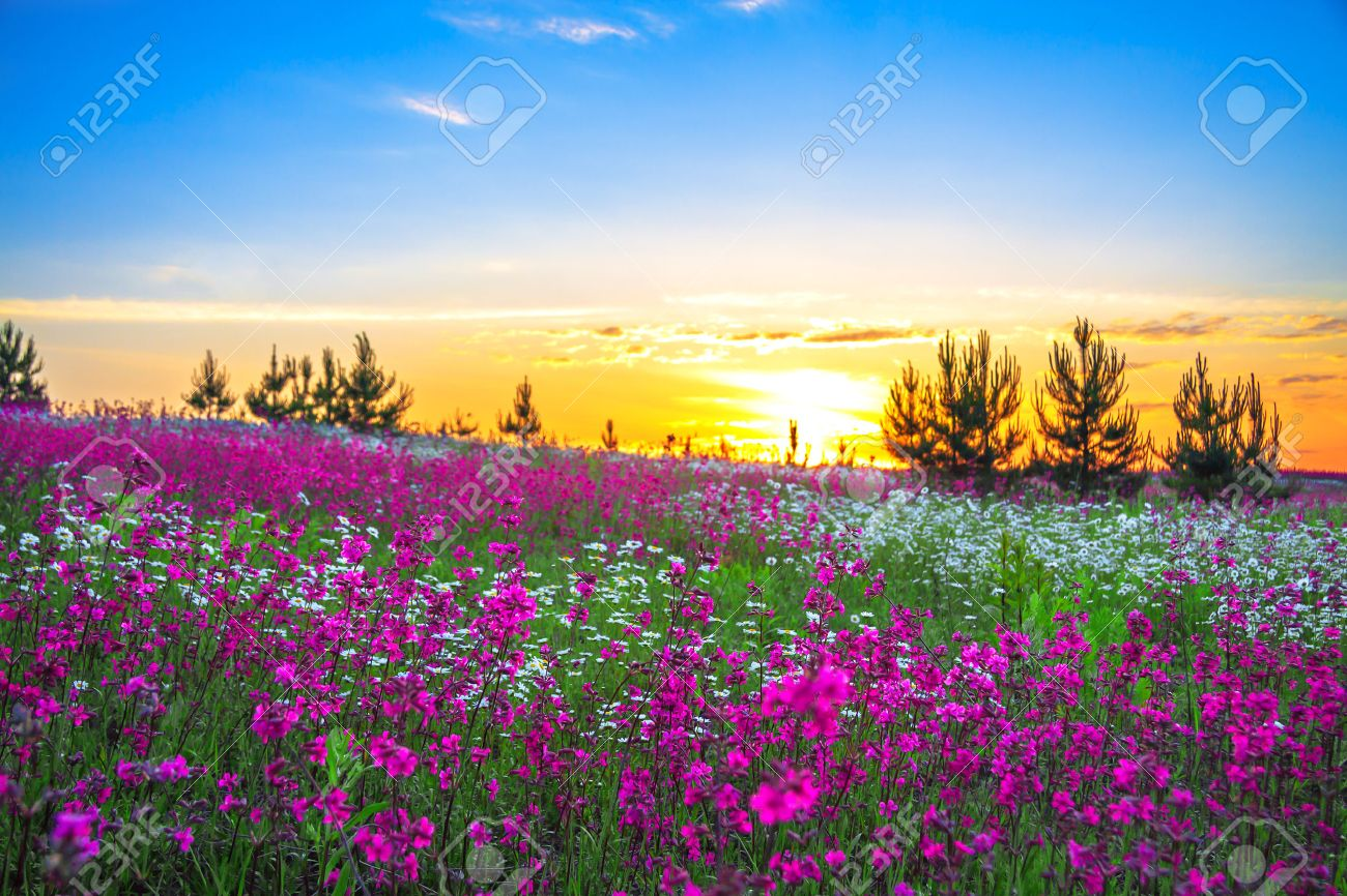 Sunrise and flowers scenery stock photo picture and royalty free stock photo sunrise and flowers scenery izmirmasajfo