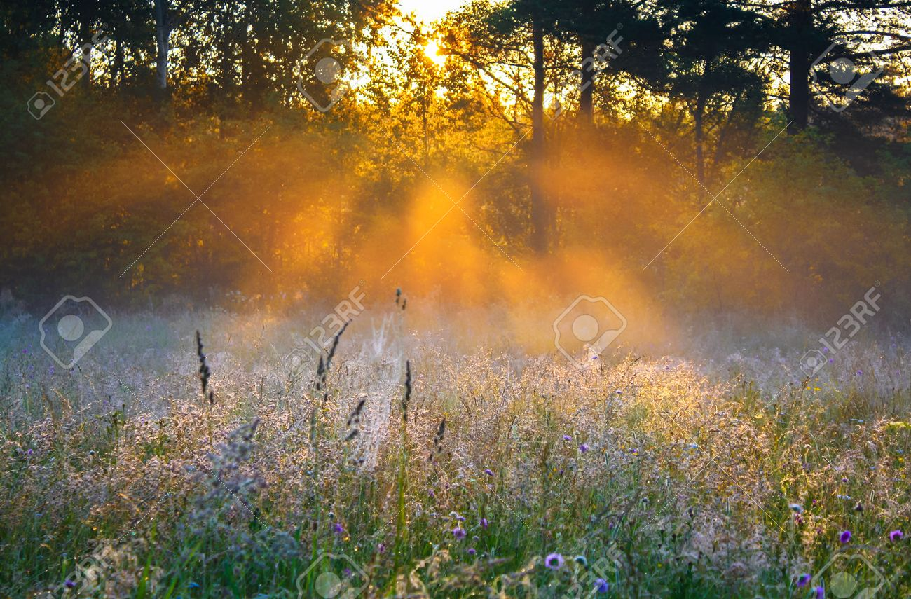 beautiful sunrise over a summer blossoming meadow - 25264723