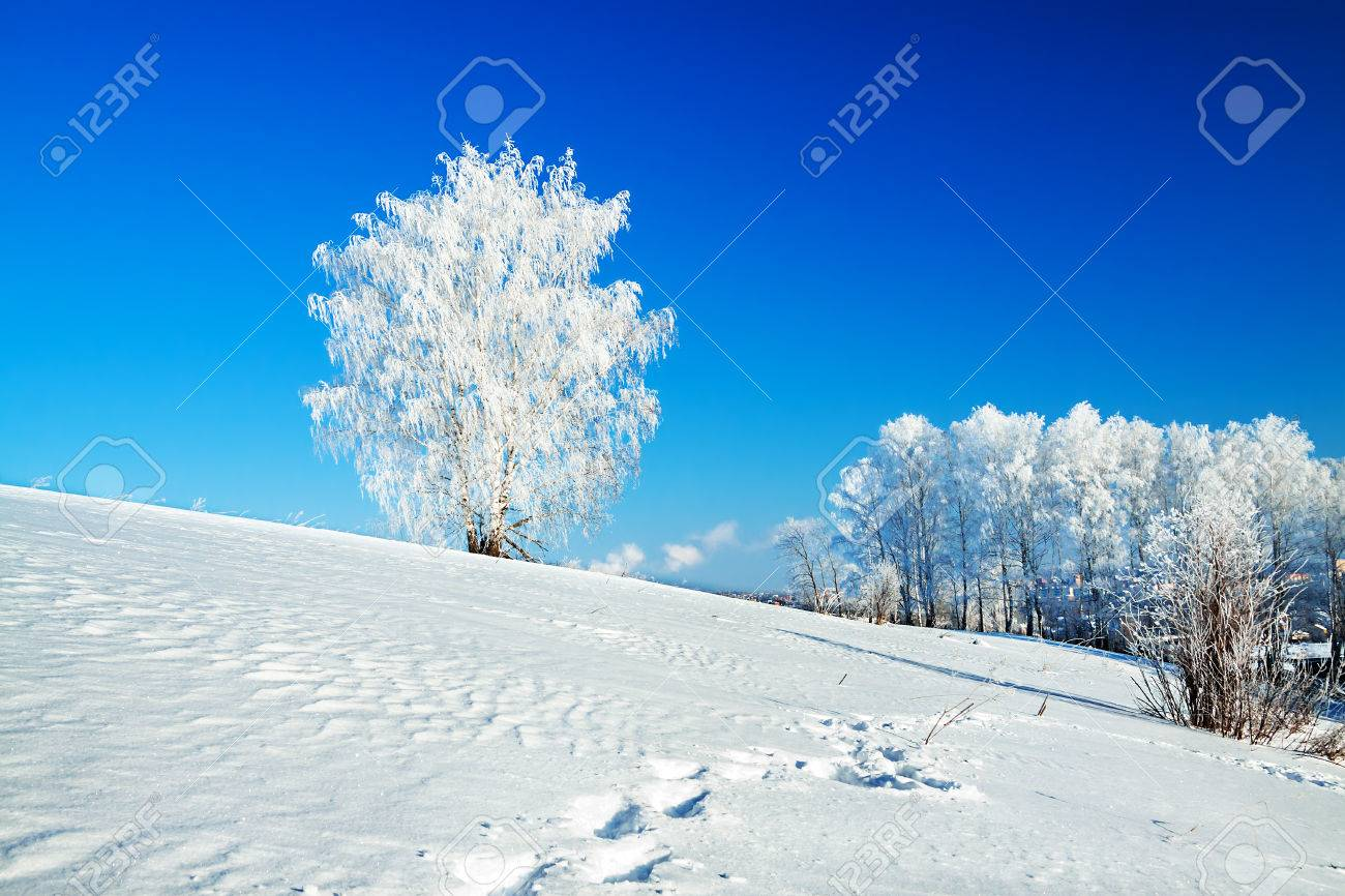 beautiful winter landscape with a lonely tree and the blue sky - 25269793