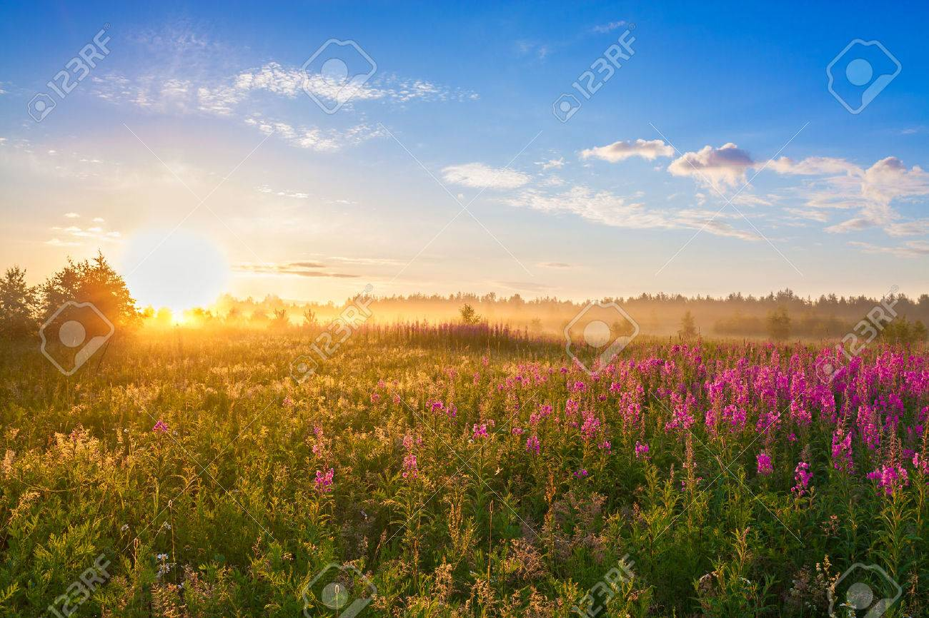 summer rural landscape with the sunrise, a blossoming meadow and fog - 30463004
