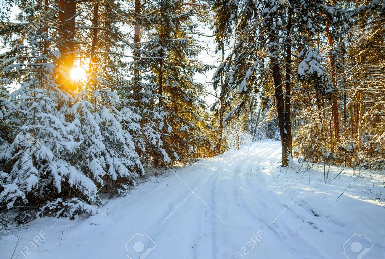 beautiful winter landscape with the forest and a road - 32424928