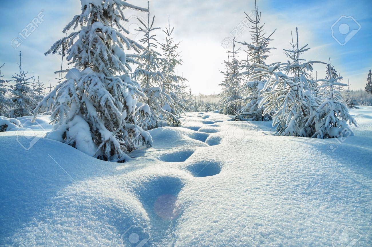 beautiful winter landscape with the forest and blue sky - 32561431