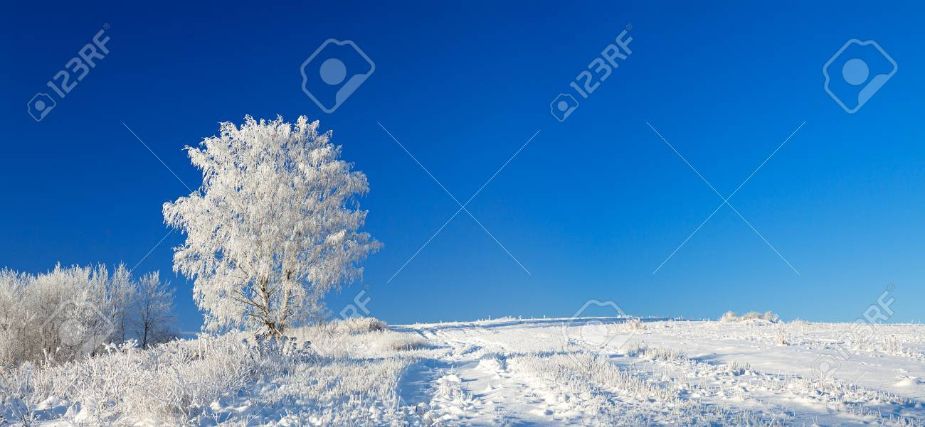 beautiful winter landscape a panorama with the blue sky, a field and the one tree - 35623164