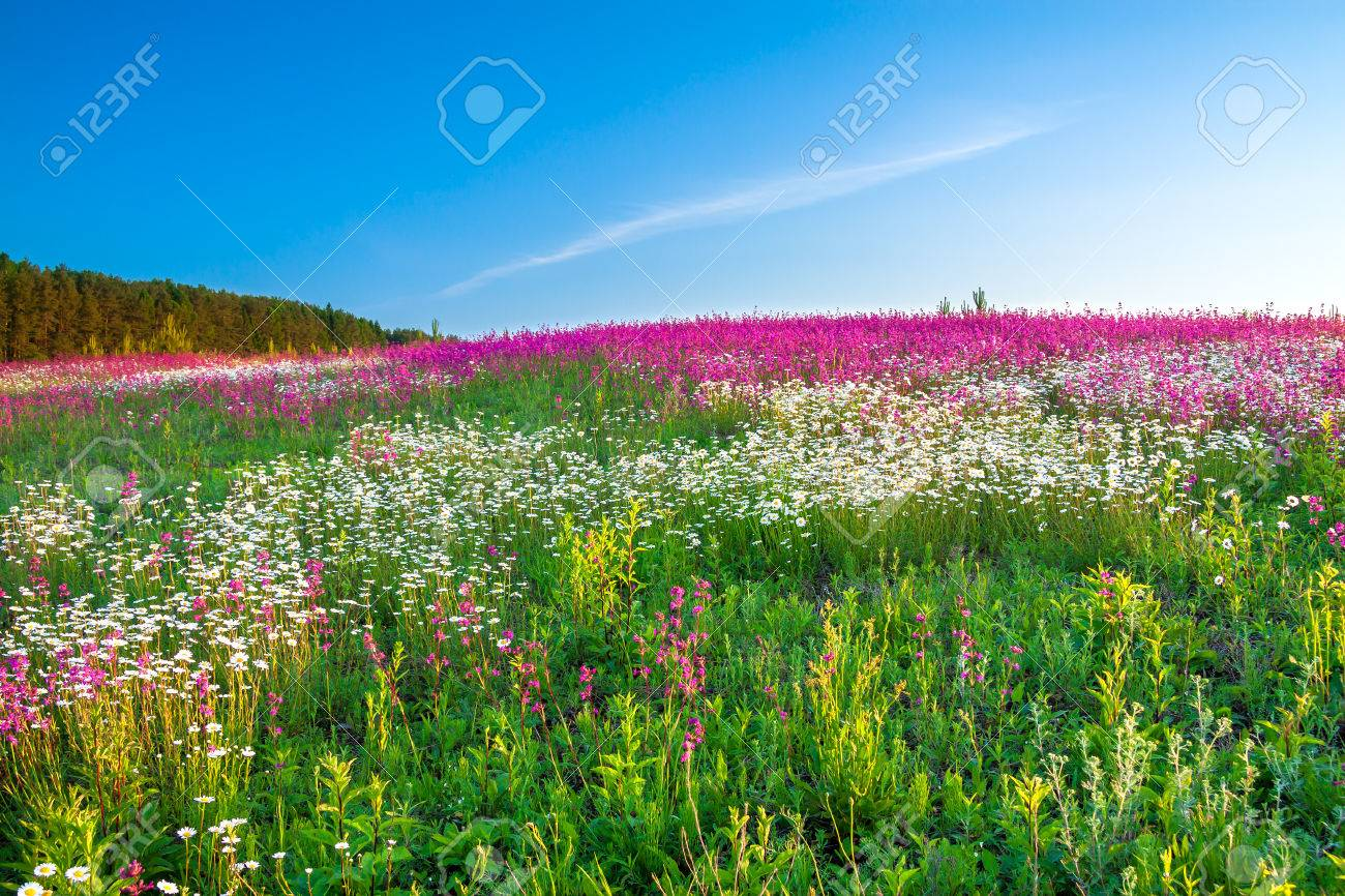 the spring landscape with flowers on a meadow - 36163020