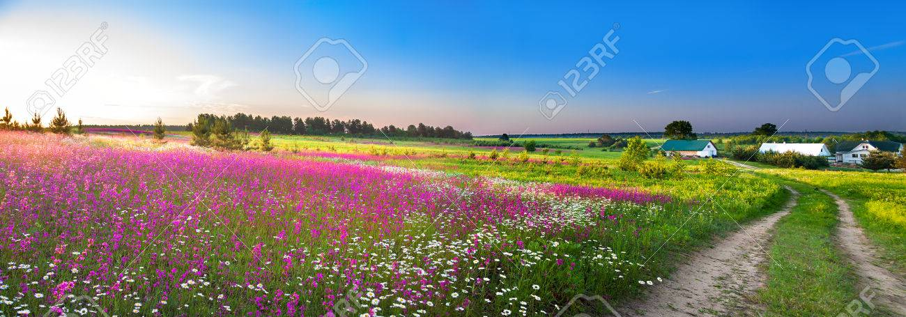 summer rural landscape panorama with a blossoming meadow, the road and a farm - 37046473