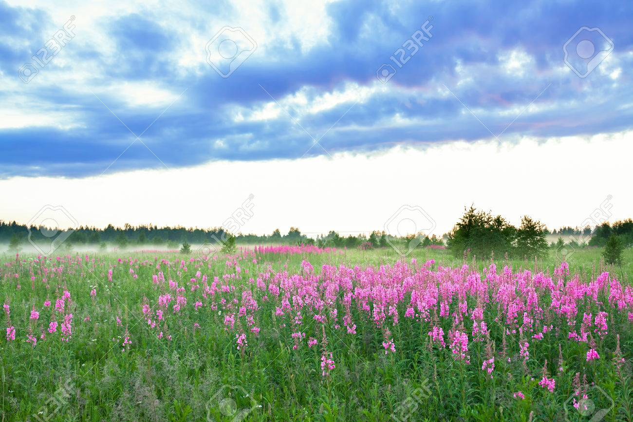 beautiful rural landscape with the blossoming meadow and fog - 37352916