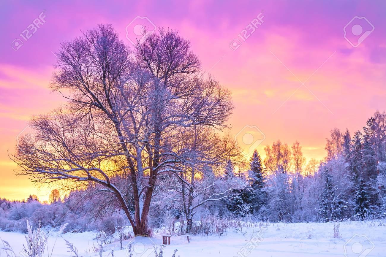 NOËL 2018 (Images, photos, paysages de fête) 88901133-beau-paysage-d-hiver-avec-la-for%C3%AAt-les-arbres-et-le-lever-du-soleil-matin-d-hiver-d-un-nouvea