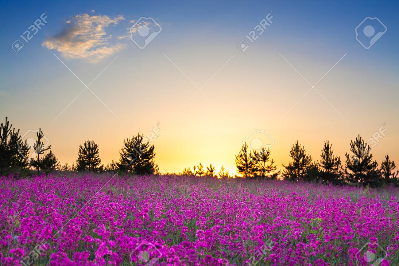 Spring Wild Flowers On A Field Summer Rural Landscape With Purple