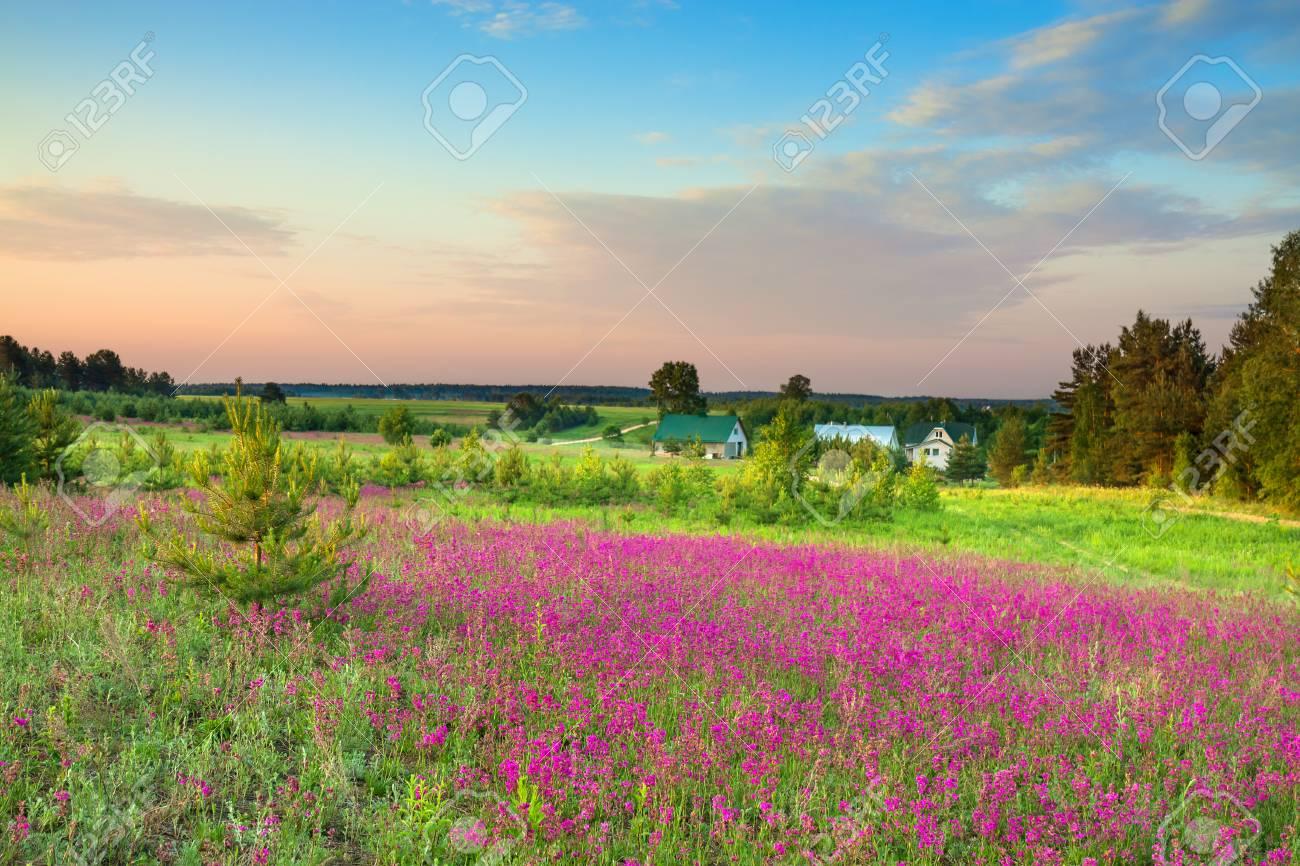 Paysage Rural D Ete Avec Une Prairie Fleurie Et Une Ferme Fleurs