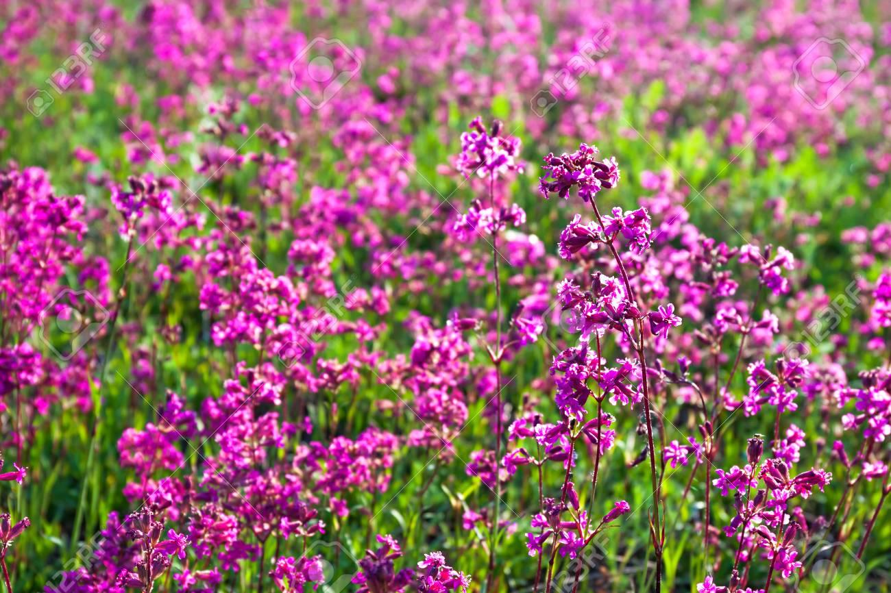 Spring wild flowers on a meadow summer rural landscape with stock spring wild flowers on a meadow summer rural landscape with purple flowers on a field mightylinksfo