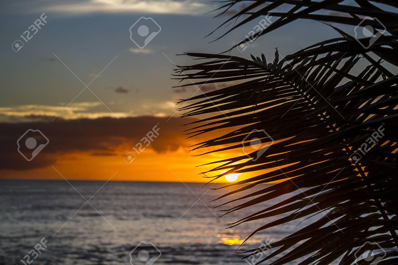 Sonnenuntergang Hinter Palmen Blatter Lizenzfreie Fotos Bilder Und