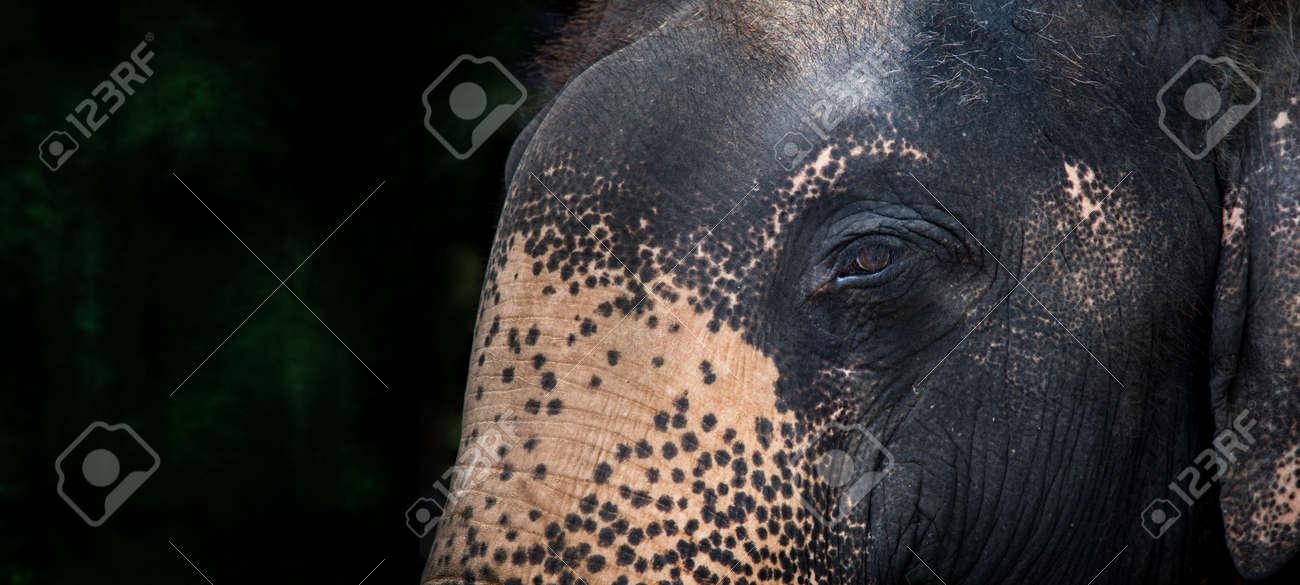 peaceful eye of elephant in banner size. big animal have friendly eye of human - 168810647