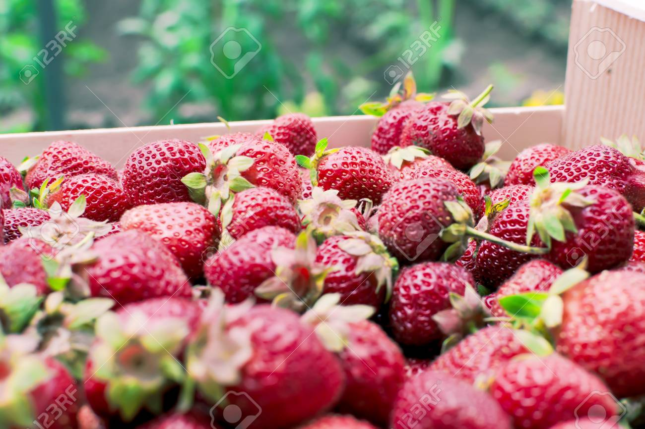 Bunch of fresh strawberries - closeup Stock Photo - 13966337