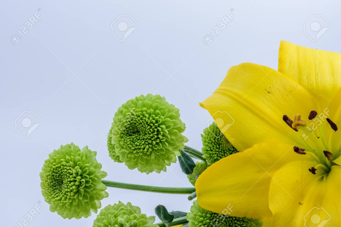 Yellow Flower With Round Green Flowers In Background Stock Photo
