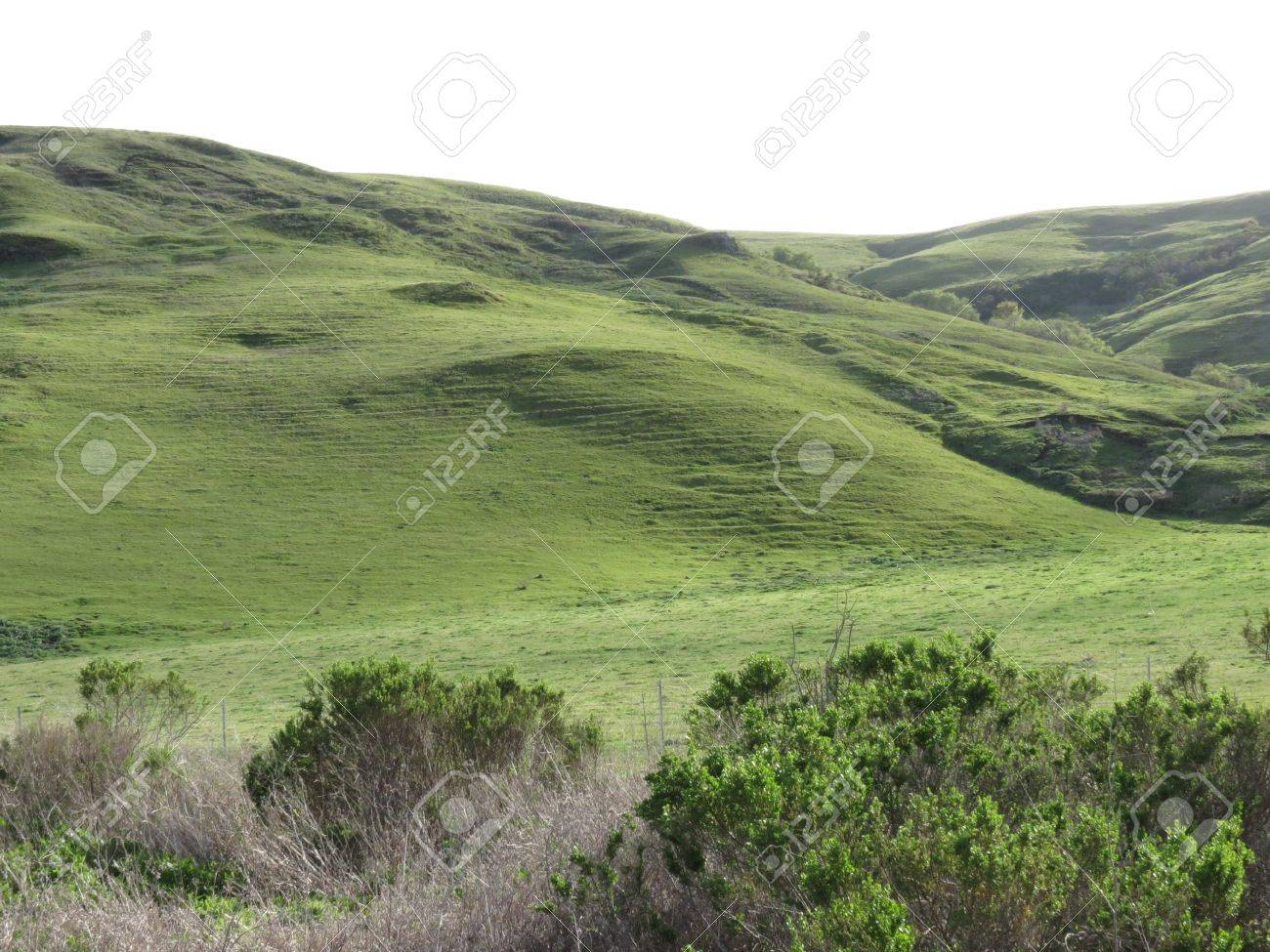 Plush green rolling hills with late afternoon shadows in a landscape from California s central coast Stock Photo - 12954230
