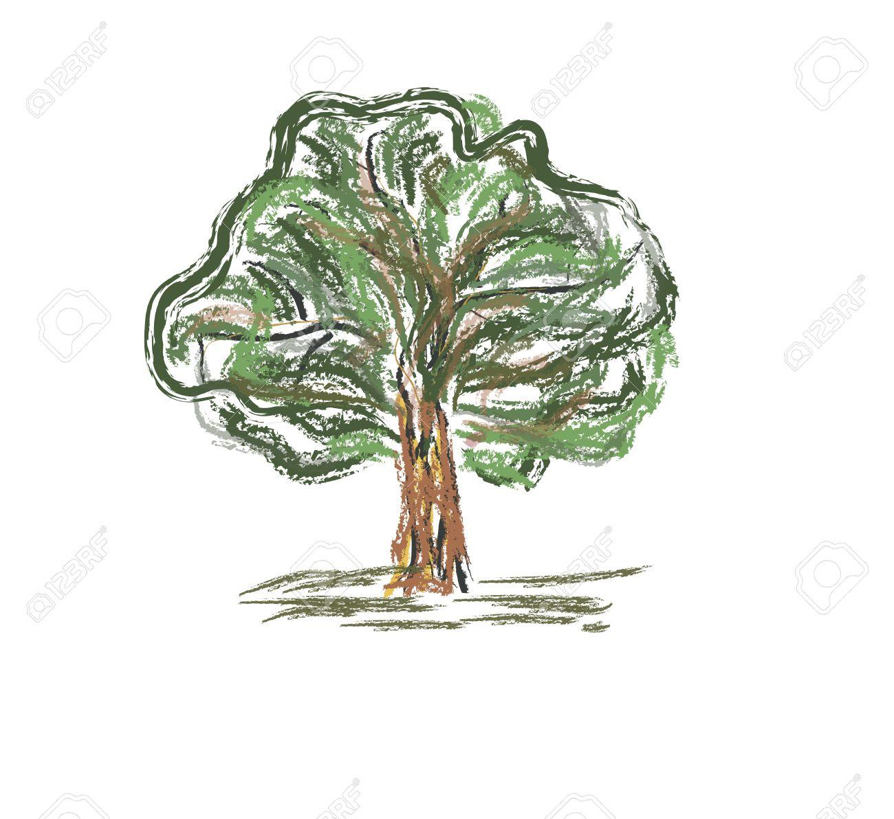 Viejo árbol De Colores Croquis A Mano Lápiz Rápida Ilustración