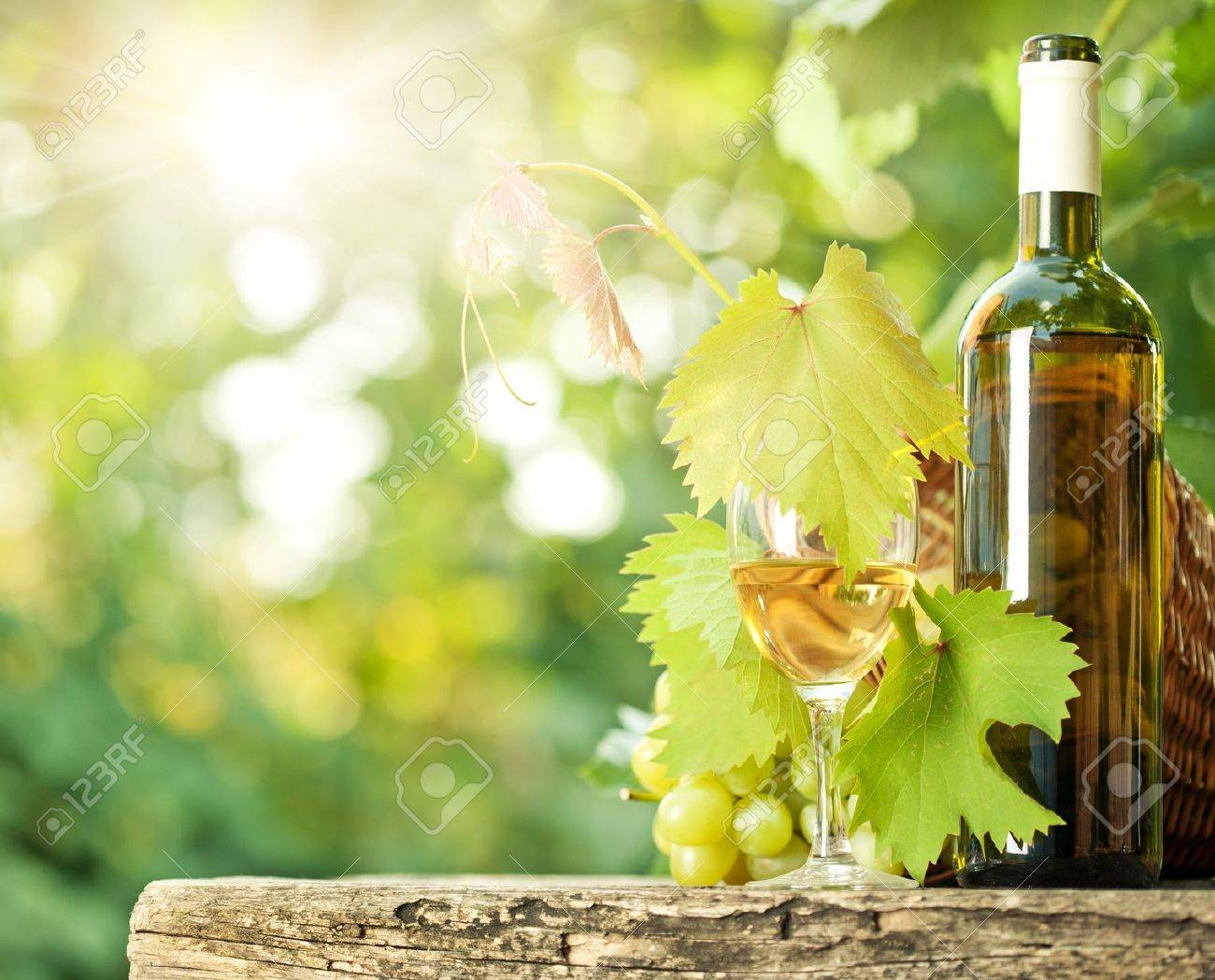White wine bottle, glass, young vine and bunch of grapes against green spring background Stock Photo - 11870359