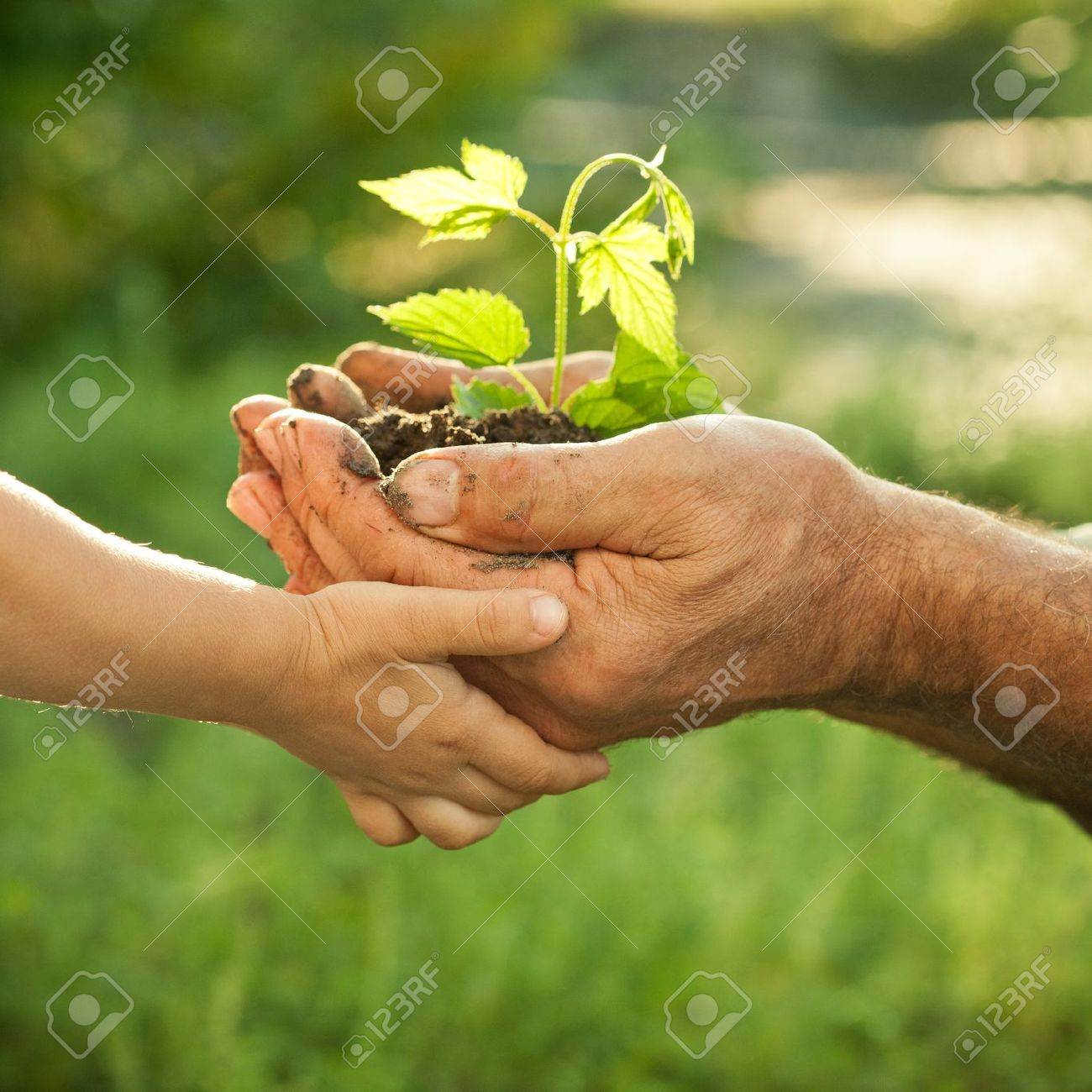 Hands of elderly man and baby holding a young plant against a green natural background in spring. Ecology concept Stock Photo - 11870363